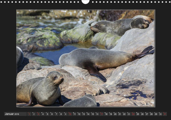 Calendar Robben Babys_01