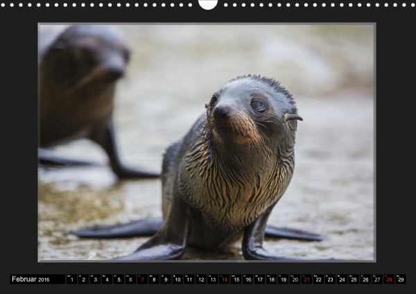 Calendar Robben Babys_02