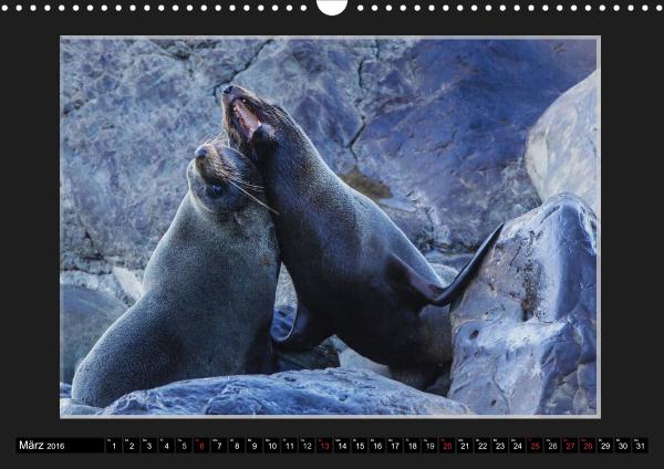 Calendar Robben Babys_03