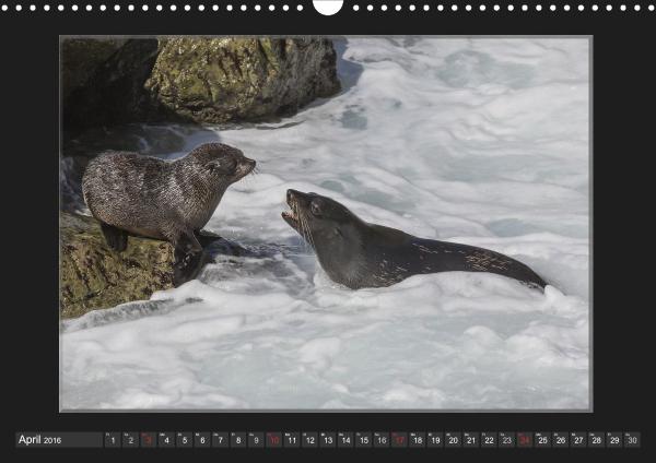 Calendar Robben Babys_04