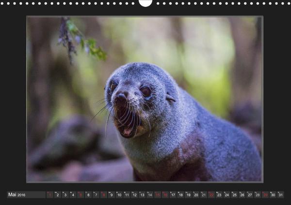 Calendar Robben Babys_05