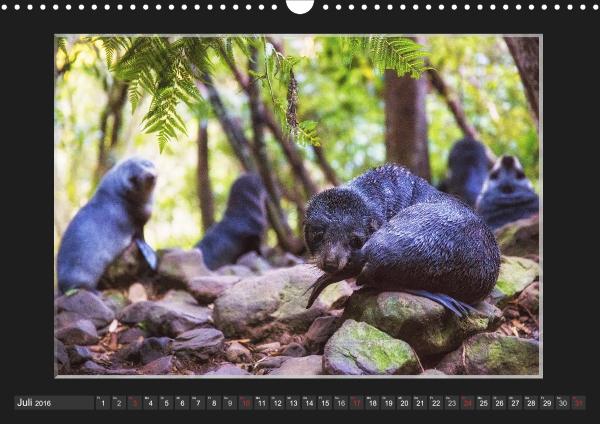 Calendar Robben Babys_07
