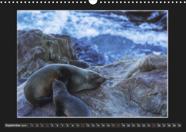 Calendar Robben Babys_09