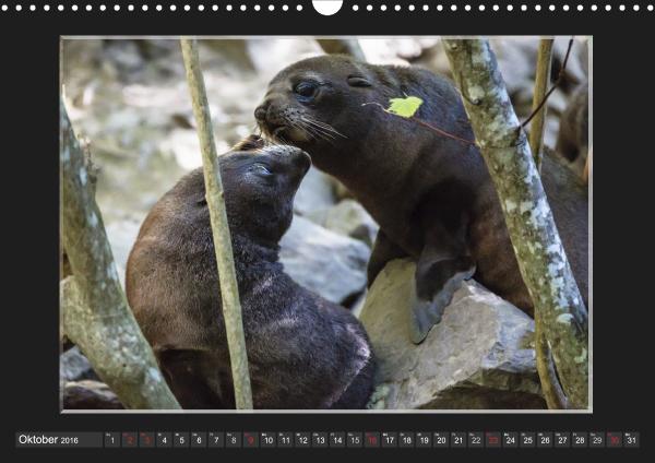 Calendar Robben Babys_10