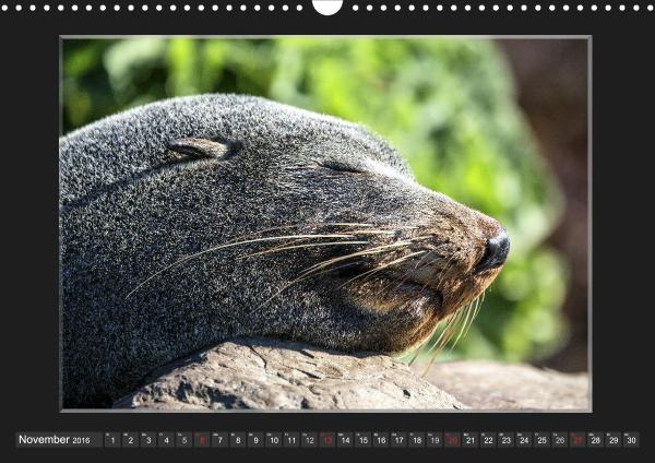 Calendar Robben Babys_11