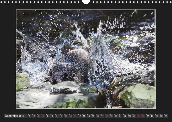 Calendar Robben Babys_12