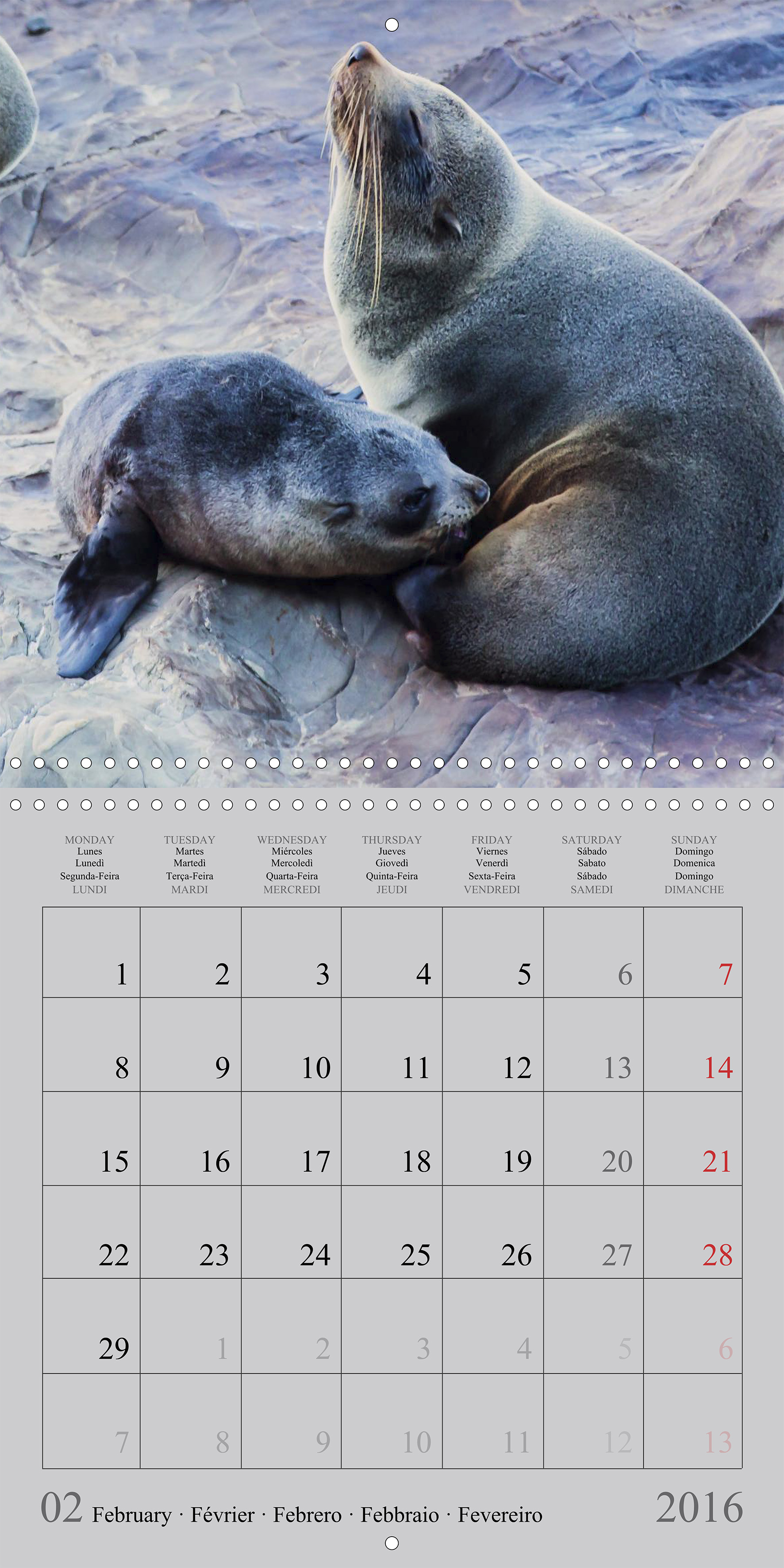 Seal puppies_02